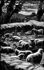 wood-engraving original print: Lambing Fold for Farmer's Glory